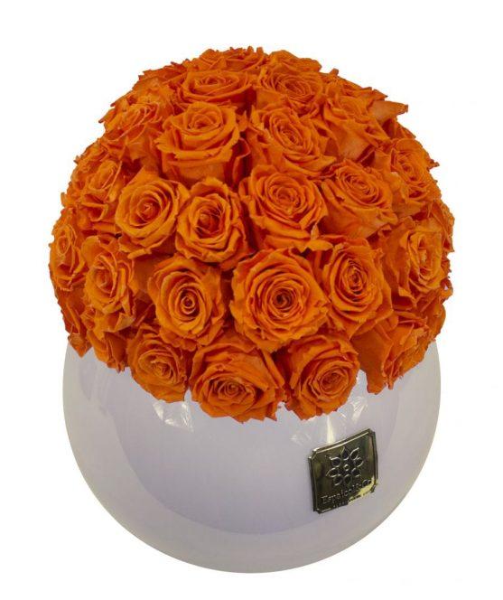 lyssa naranja arriba