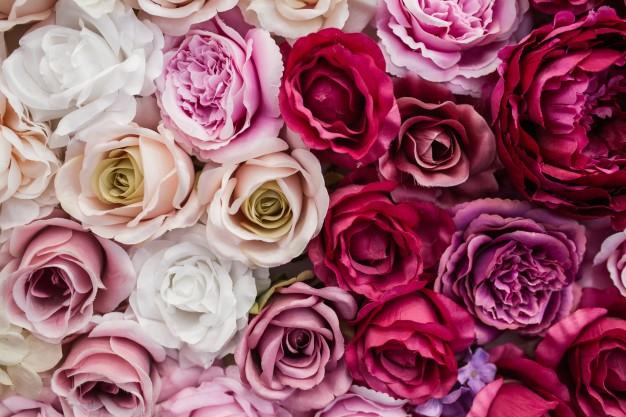 Las rosas durante la historia ¿de dónde provienen?